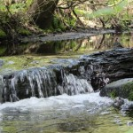 Finished stream restoration- North Seattle - JIm Freese (2)- SnoKing