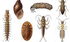 Stream Bugs Indicate Stream Health